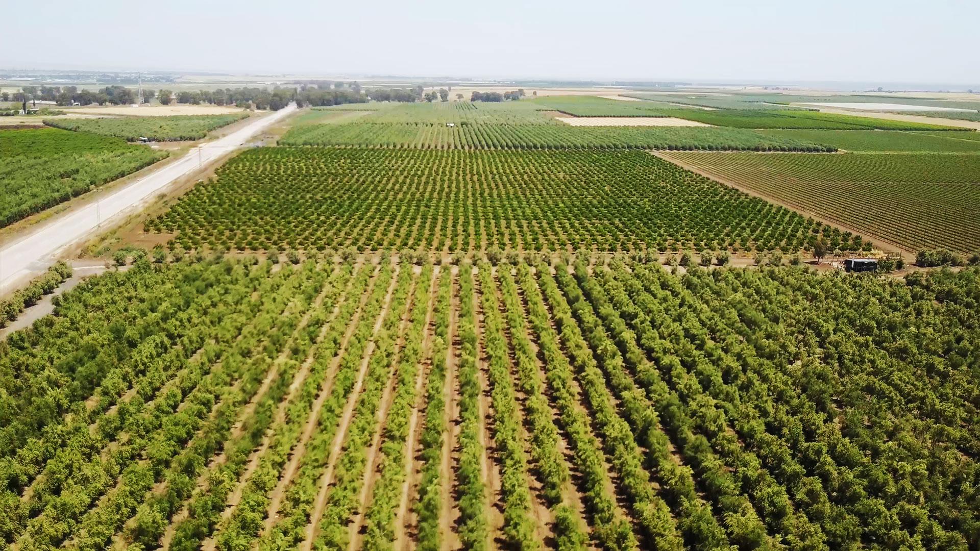 10 тис.га в одні руки та заборона на покупку іноземцями, - аграрний комітет ВР розглянув всі поправки до законопроєкту про ринок землі - Цензор.НЕТ 7797