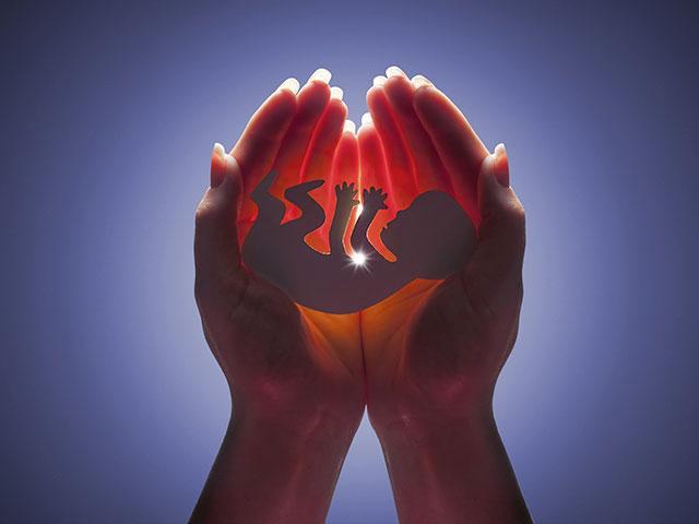 abortion-embryo