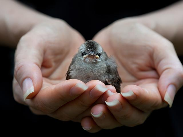 little bird in a person