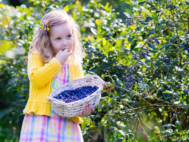 child-girl-blueberries_si.jpg