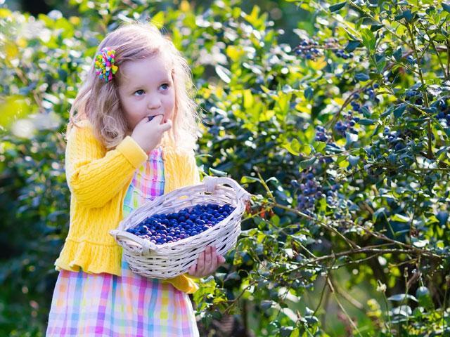 child-girl-blueberries_si.jpg