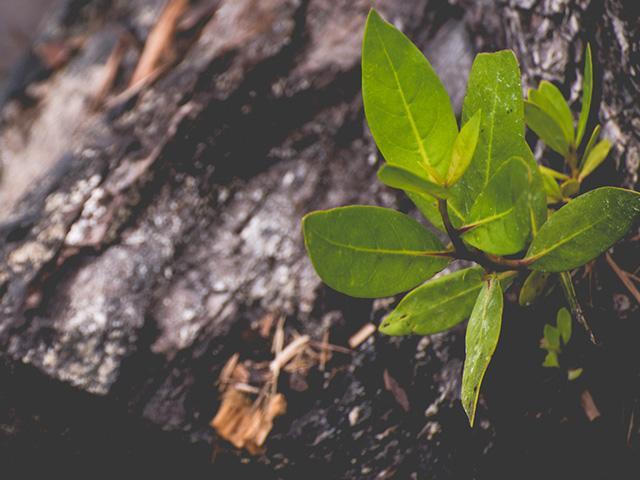 dead-tree-sapling_si.jpg