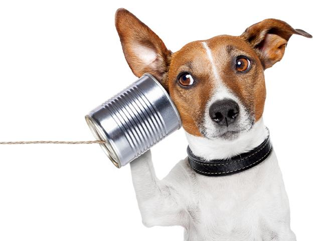 dog with a can and string phone up to his ear