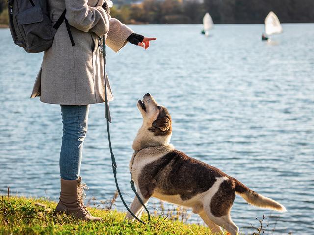 person walking a dog beside a lake