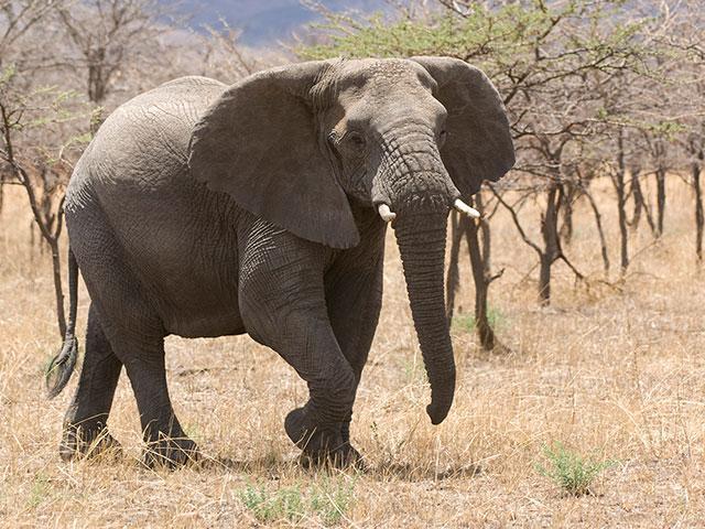 elephant-nature-africa_si.jpg
