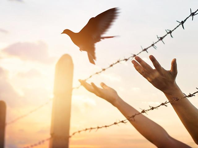 freedom-bird-hands