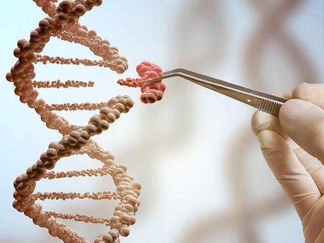 genemanipulationas