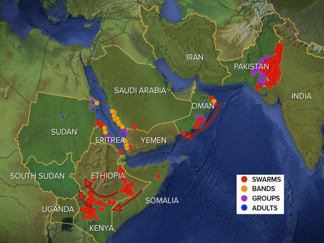 ¿Qué permitió que las langostas se multiplicaran por millones? La peste se extiende mucho más allá de África a través de Medio Oriente hasta China - locustmap hdv