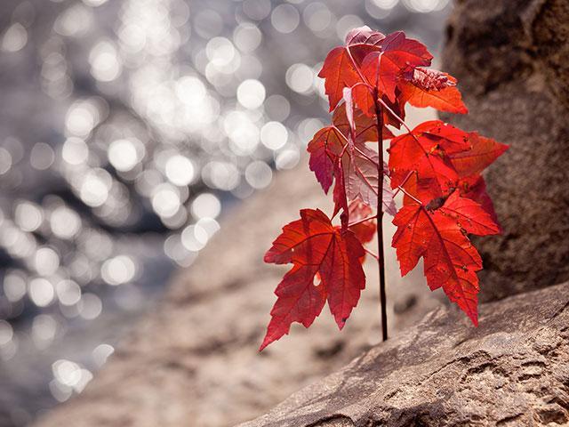 maple-tree-seedling_SI.jpg