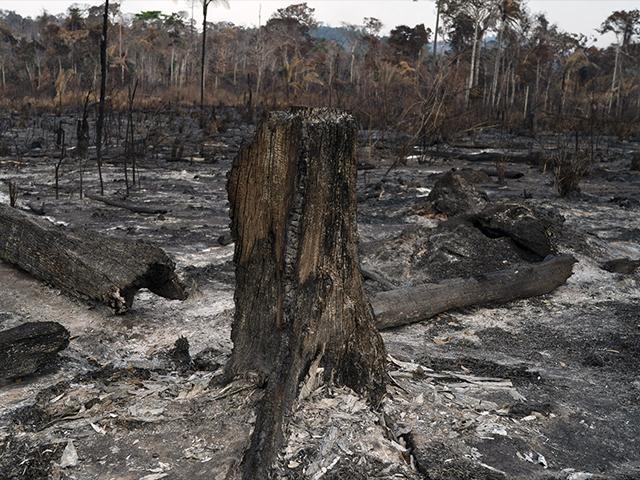Trees are destroyed after a fire in the Alvorada da Amazonia region in Novo Progresso, Para state, Brazil, Sunday, Aug. 25, 2019. (AP Photo/Leo Correa)