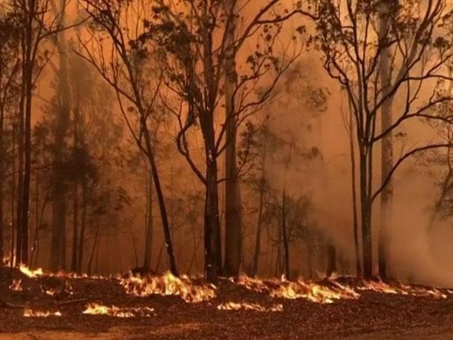 Australian wildfires (AP Photo)