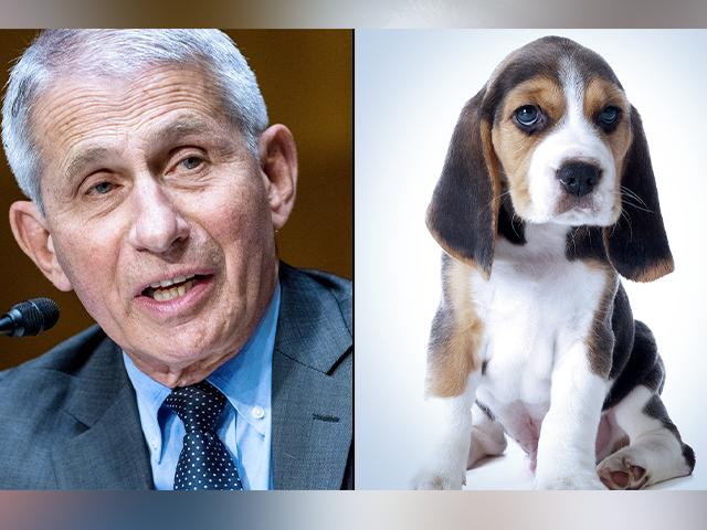 Dr. Anthony Fauci/Adobe Stock