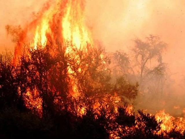 Incendios en Argentina. Foto: ACIERA