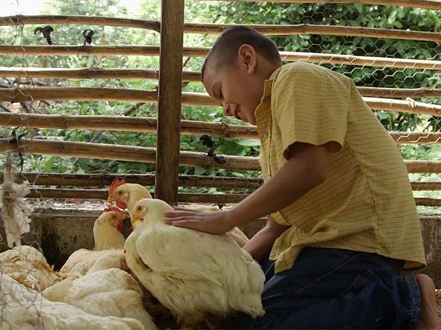 Jorges Chickens