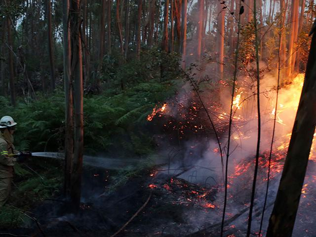 Forest Fire in Portugal