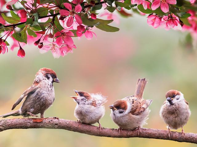 mother bird with chicks on a branch