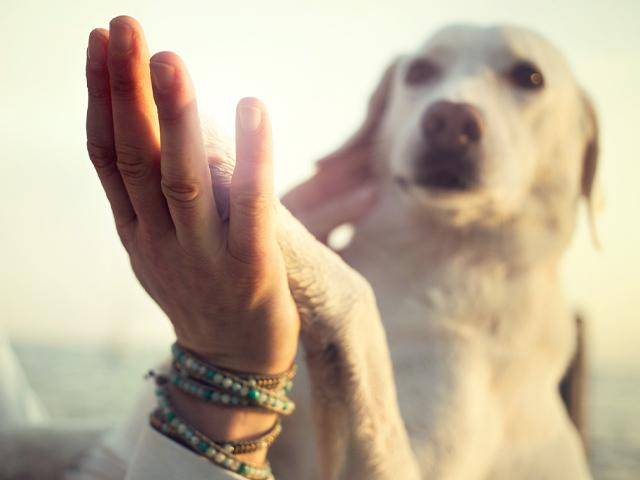 white dog putting paw up to owner