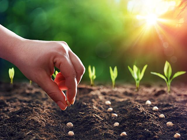 Sow the Seeds Where You Are | CBN.com
