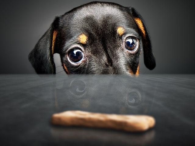 puppy-wants-treat_si.jpg