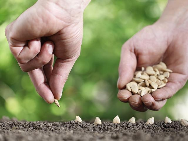 closeup of someone planting seeds