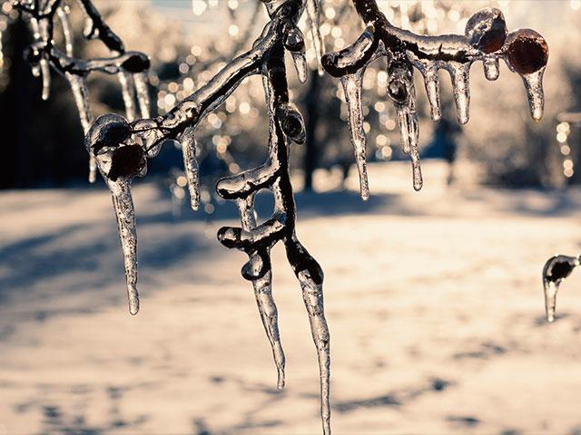snowiciclesbranchesas