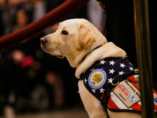Bush's service dog again pays tribute to his late owner