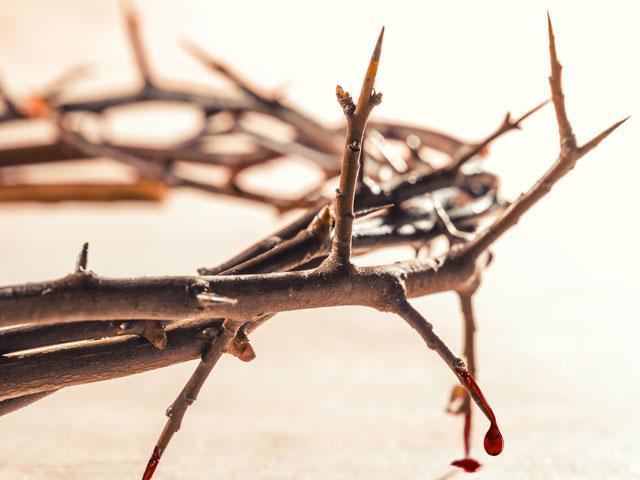 thorns-crown-closeup_si.jpg