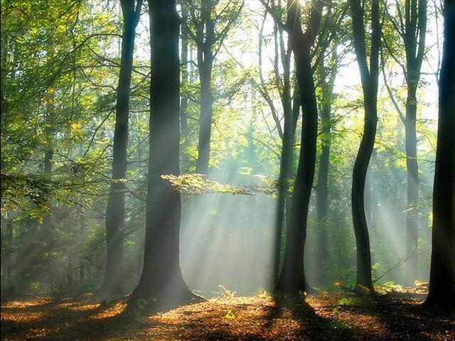 trees-light-serenity