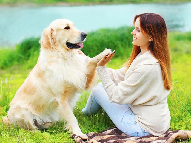 woman training a golden retriever
