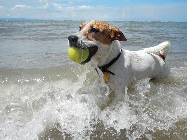 Dog Fetch Ball
