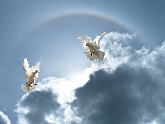 heavenly hearts day program