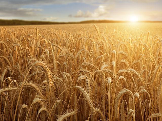 50 Days of Faith -- Seeds of Revival | CBN com