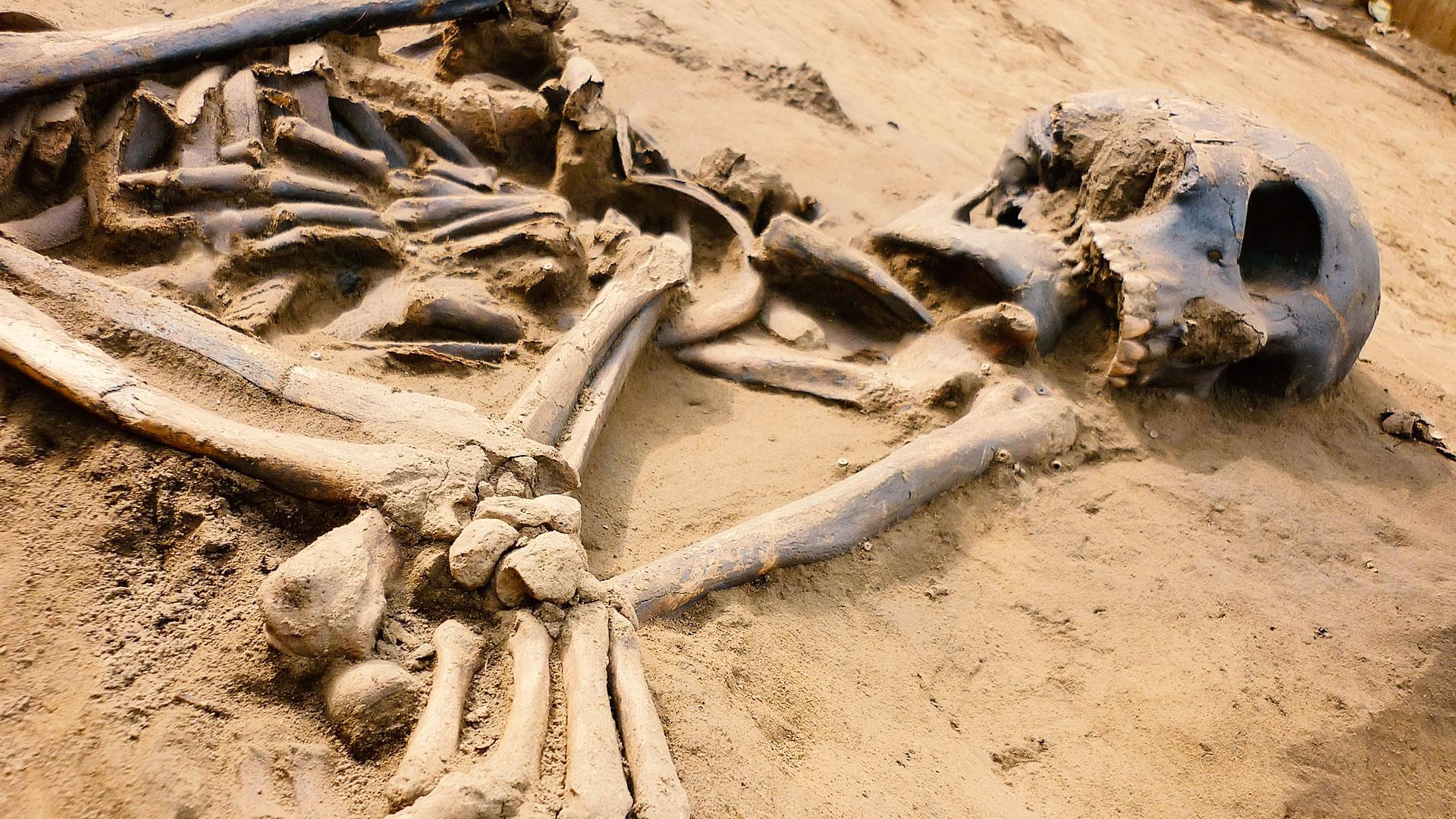 skeletonbonesas_hdv.jpg?itok=2wo135T4