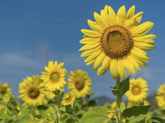 Son Flowers Cbn