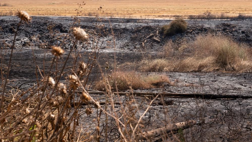 Scorched Field in Southern Israel, Photo, CBN News, Jonathan Goff