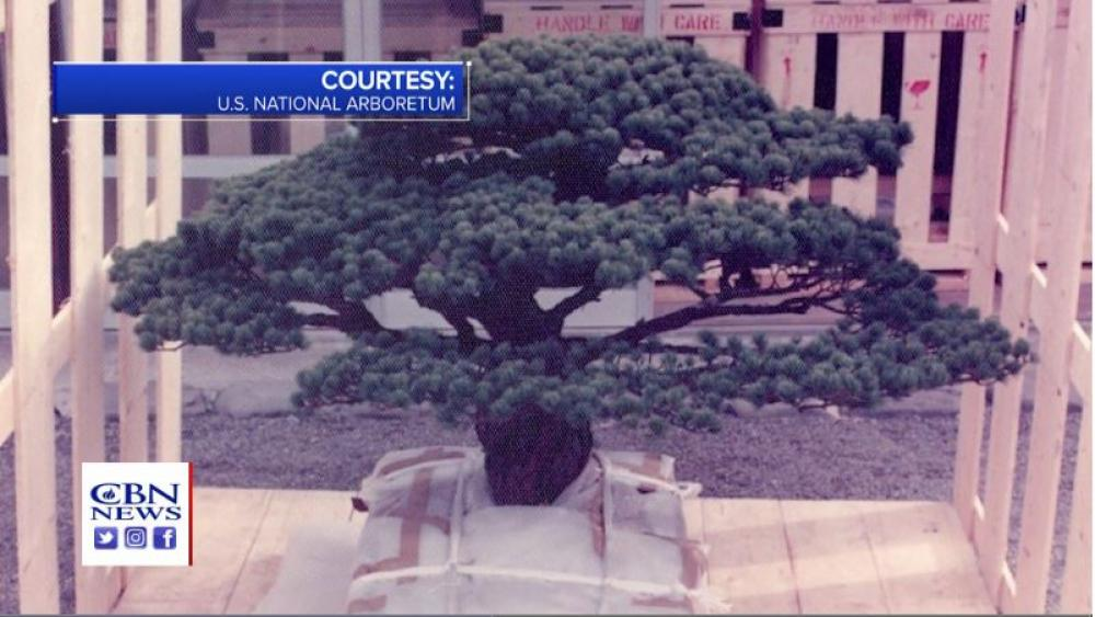 Atomic Wonder: A Bonsai Tree Withstood Blast Equaling 20 Kilotons of