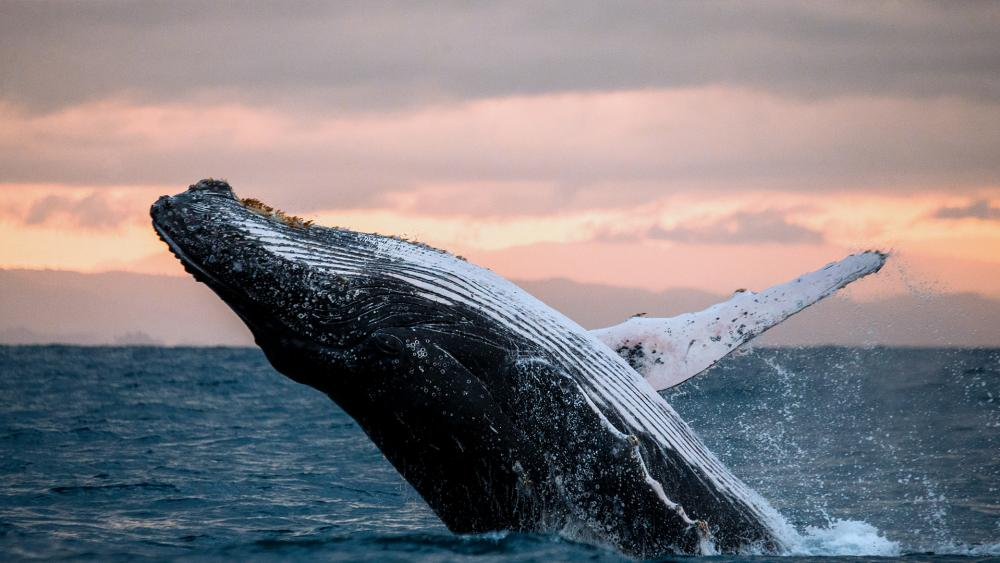Swallowed by a Whale: A Modern Day Headline with Biblical Overtones
