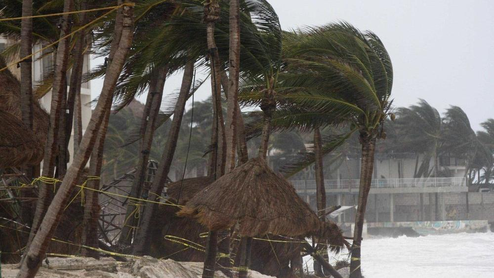 Palm trees are buffeted by the winds of Hurricane Zeta in Playa del Carmen, Mexico, early Tuesday, Oct. 27, 2020. (AP Photo/Tomas Stargardter)