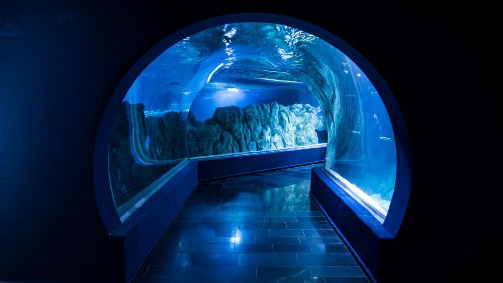 Israel Aquarium Tunnel, Photo, CBN News, Jonathan Goff