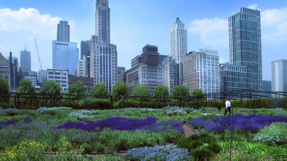 Lurie Garden in Millennium Park located in Chicago, Illinois. (Image credit: Adobe Stock)