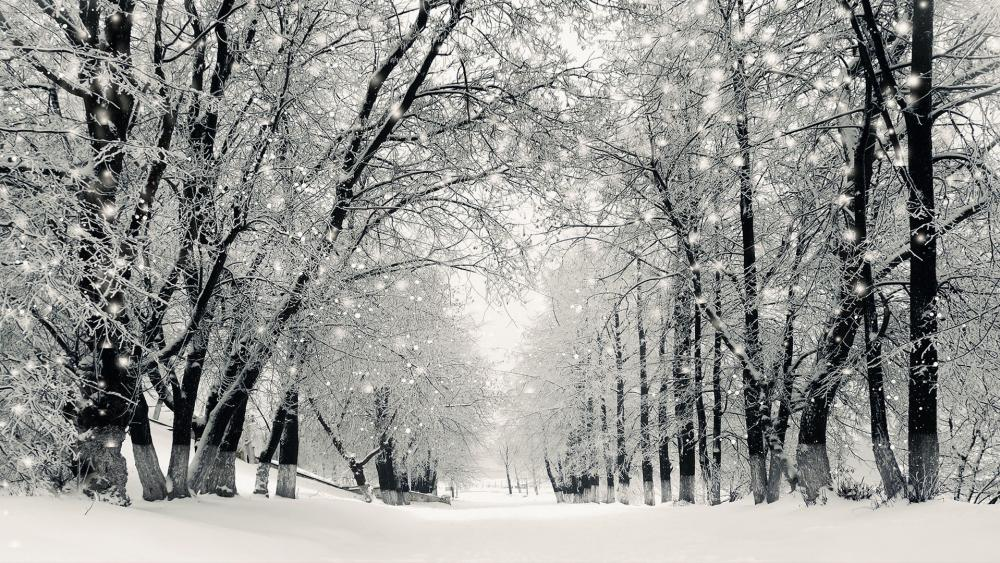 snowstormwinteras